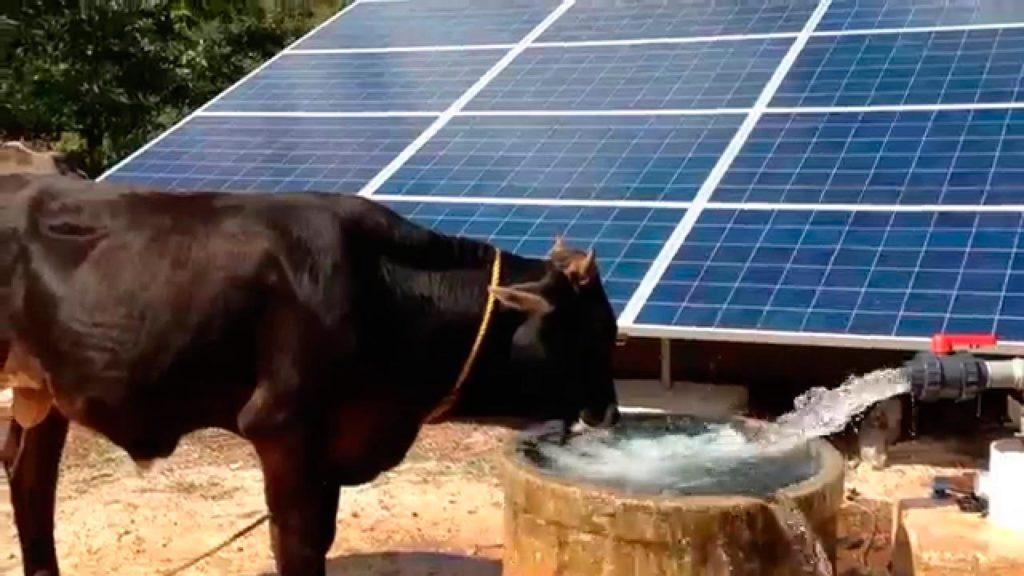 agua potable ganado
