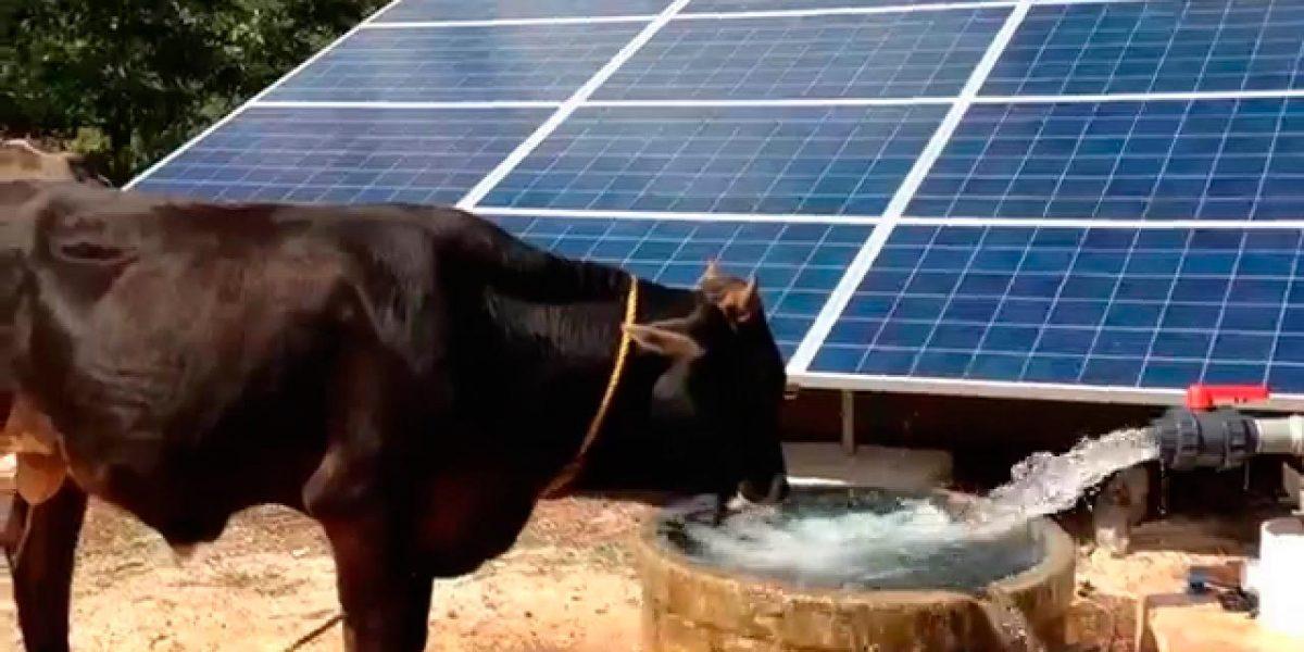 agua-potable-ganado